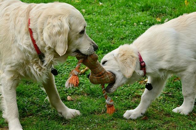 Netradiční hračky pro psy